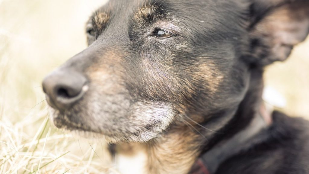 Important signs of dog dying you need to look for.